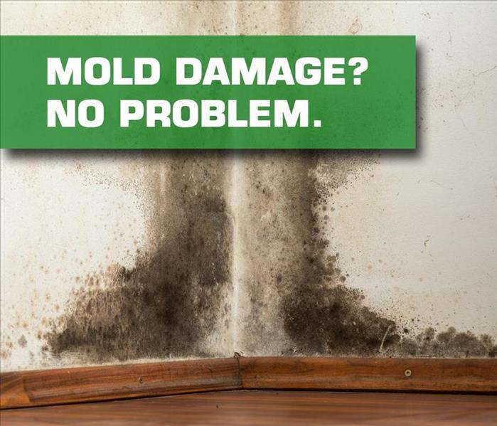 Mold Remediation Go Mold?