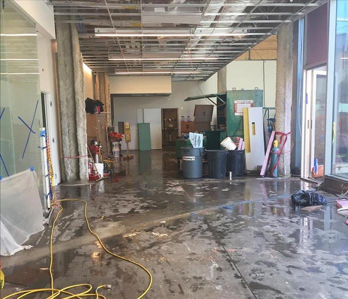 Mold Remediation Commercial Mold Damage
